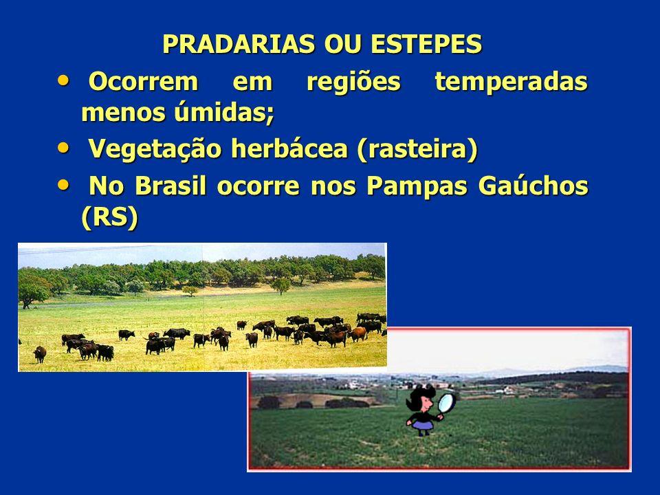 PRADARIAS OU ESTEPES Ocorrem em regiões temperadas menos úmidas; Vegetação herbácea (rasteira) No Brasil ocorre nos Pampas Gaúchos (RS)