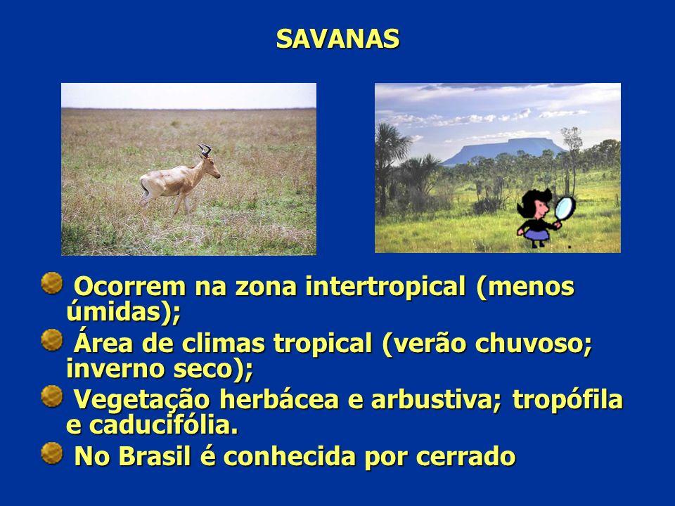SAVANAS Ocorrem na zona intertropical (menos úmidas); Área de climas tropical (verão chuvoso; inverno seco);