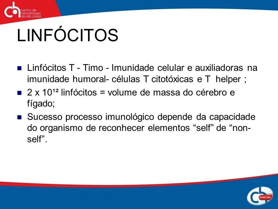 LINFÓCITOS Linfócitos T - Timo - Imunidade celular e auxiliadoras na imunidade humoral- células T citotóxicas e T helper ;