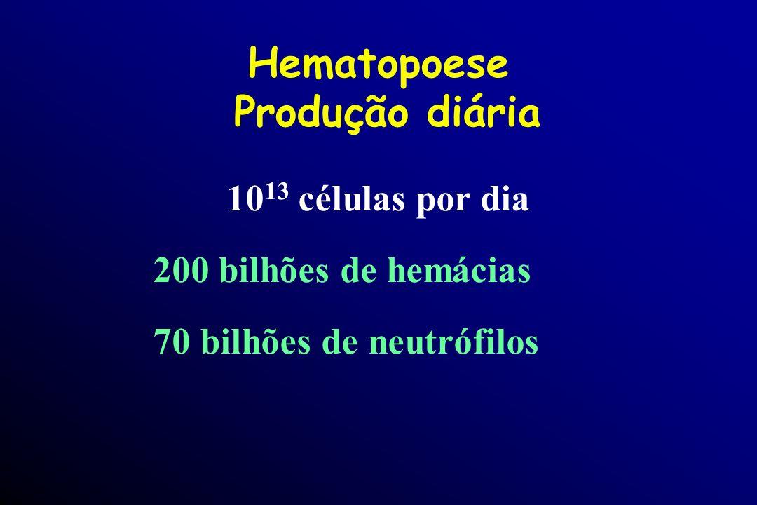 Hematopoese Produção diária
