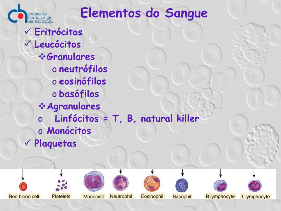 Elementos do Sangue Eritrócitos Leucócitos Granulares neutrófilos