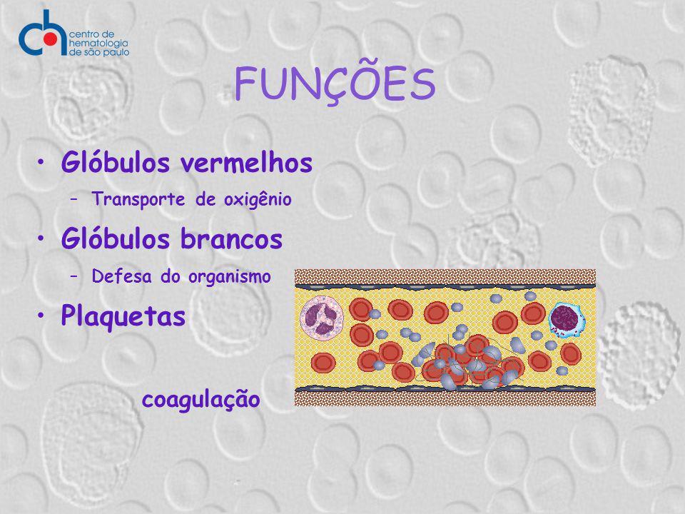 FUNÇÕES Glóbulos vermelhos Glóbulos brancos Plaquetas coagulação