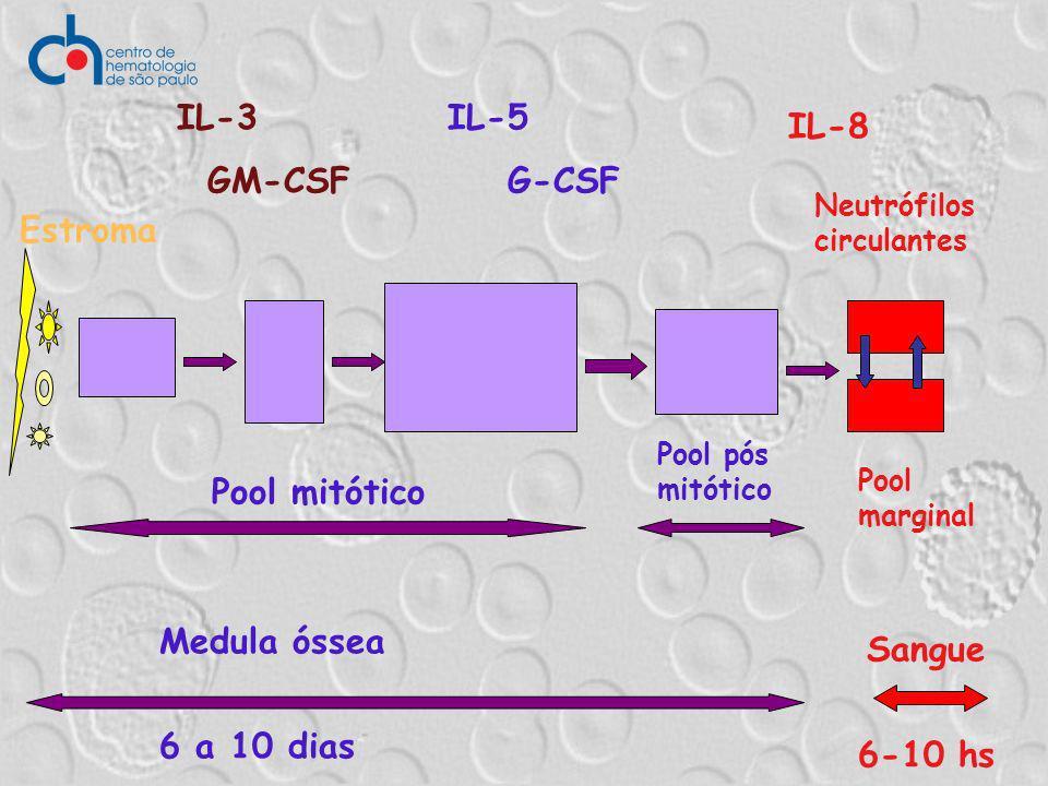 Medula óssea 6 a 10 dias Sangue 6-10 hs Estroma Pool mitótico IL-3