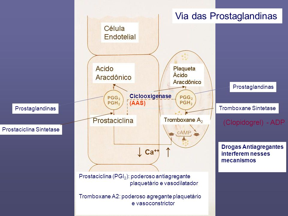 ↓ Ca++ ↑ Via das Prostaglandinas (Clopidogrel) - ADP Prostaglandinas