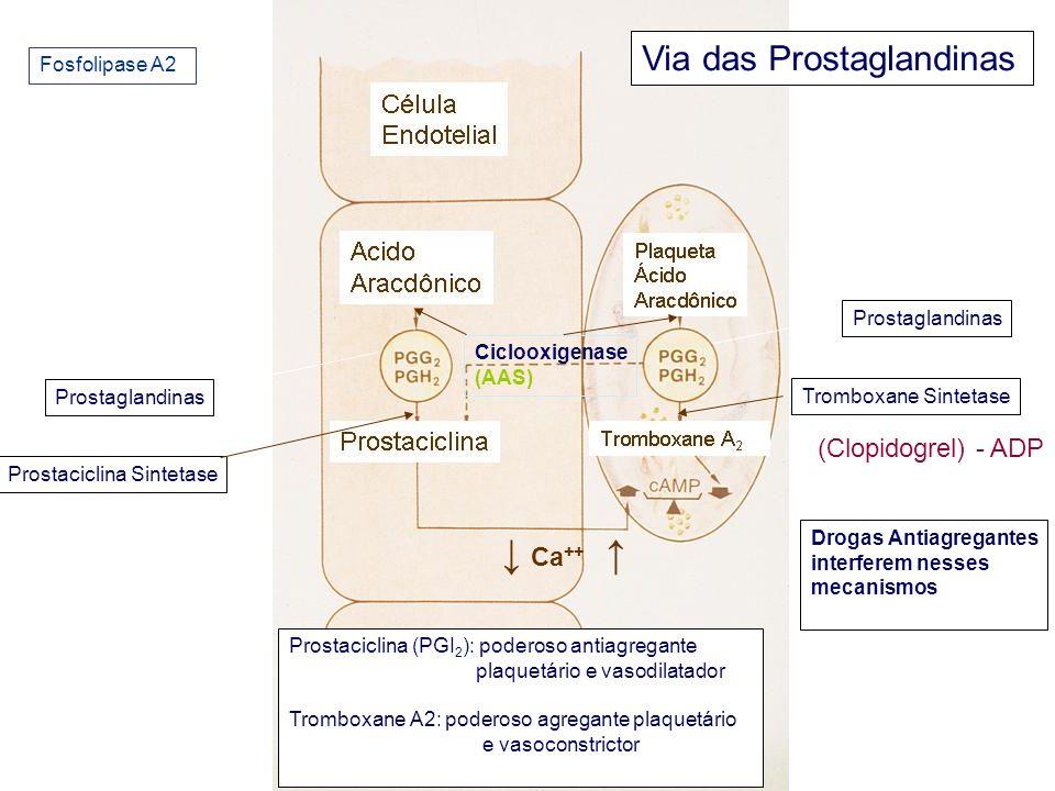 ↓ Ca++ ↑ Via das Prostaglandinas (Clopidogrel) - ADP Fosfolipase A2