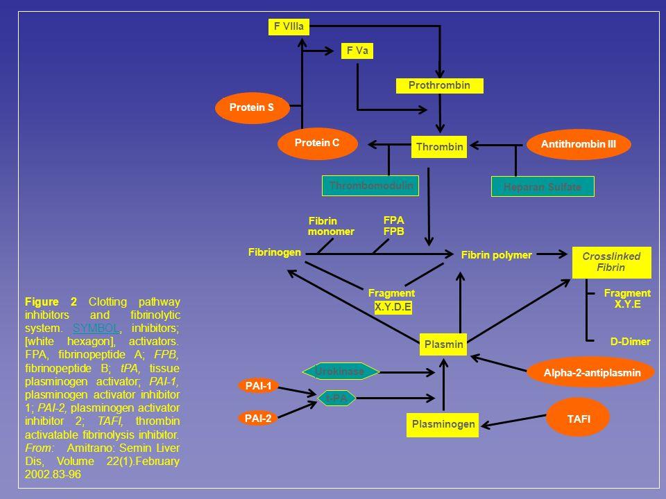F Vllla F Va. Prothrombin. Protein S. Protein C. Thrombin. Antithrombin III. Thrombomodulin. Heparan Sulfate.