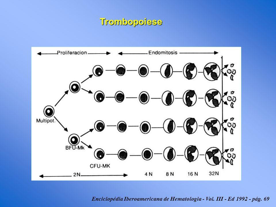 Trombopoiese Enciclopédia Iberoamericana de Hematologia - Vol. III - Ed 1992 - pág. 69