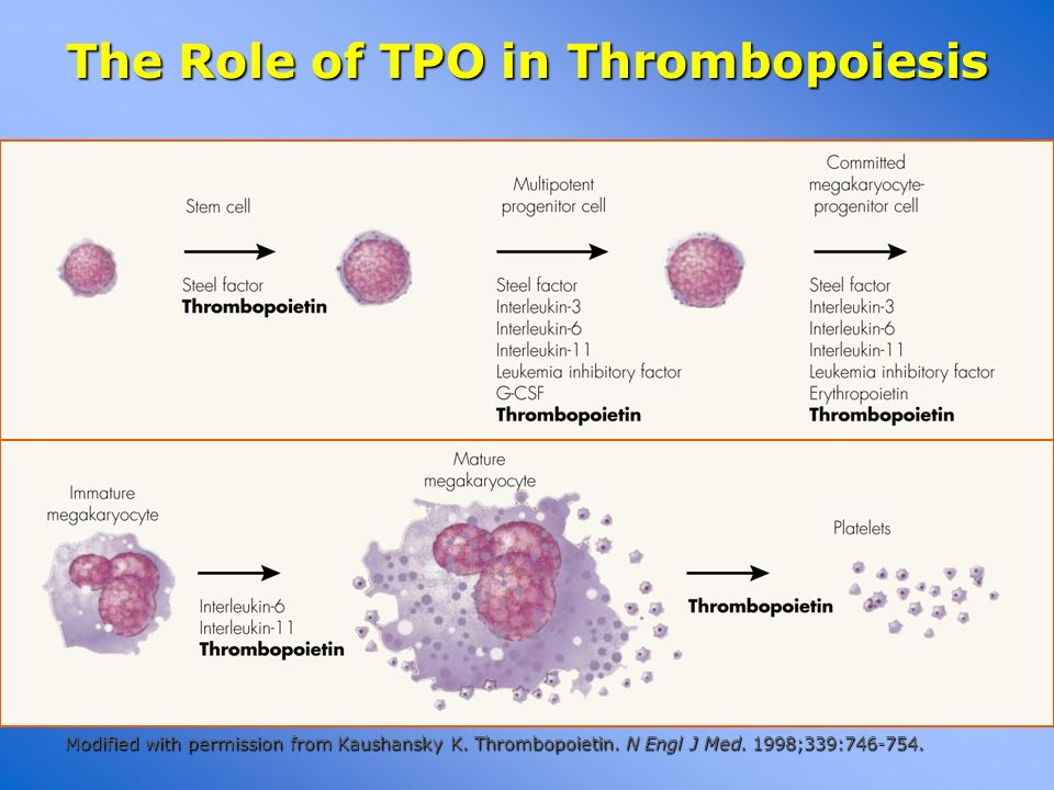 The Role of TPO in Thrombopoiesis