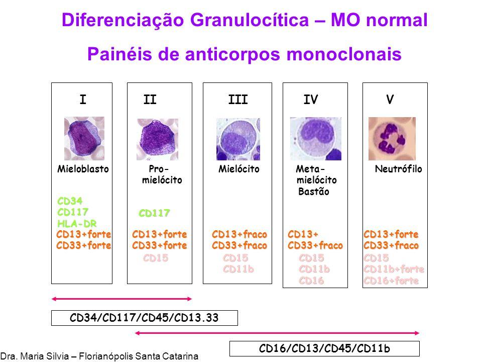 Diferenciação Granulocítica – MO normal