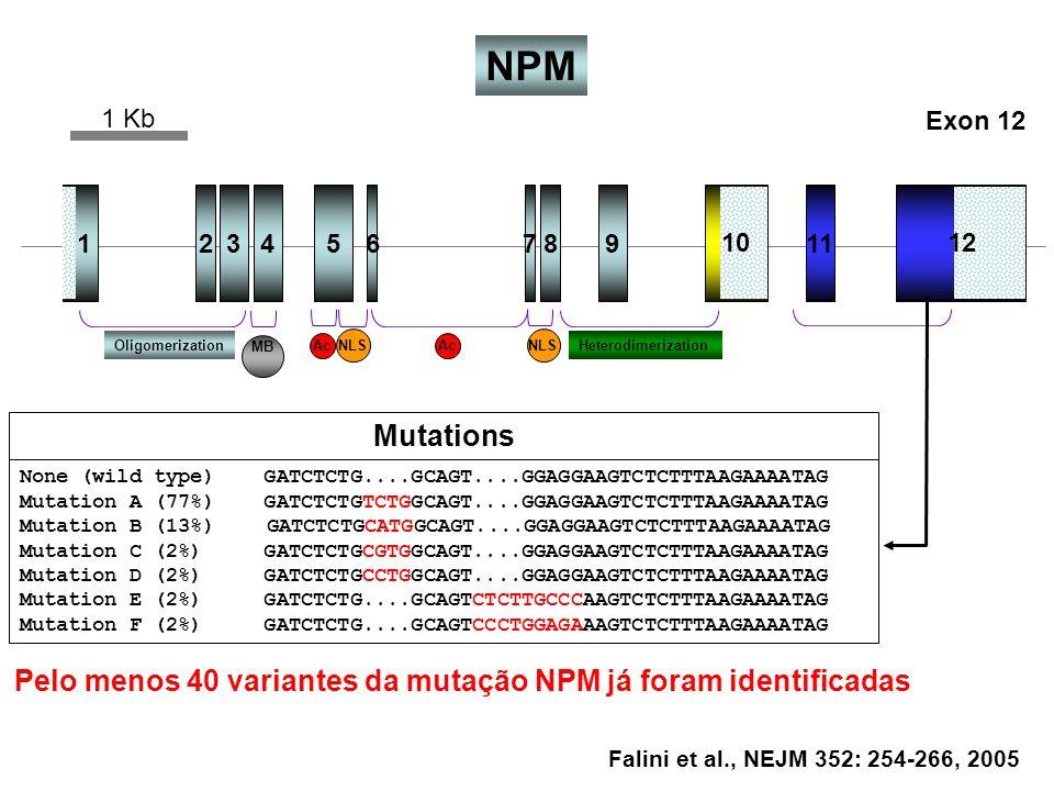 NPM 1 Kb. Exon 12. 1. 2. 3. 4. 5. 6. 7. 8. 9. 11. 10. 12. Oligomerization. MB. Ac. NLS.