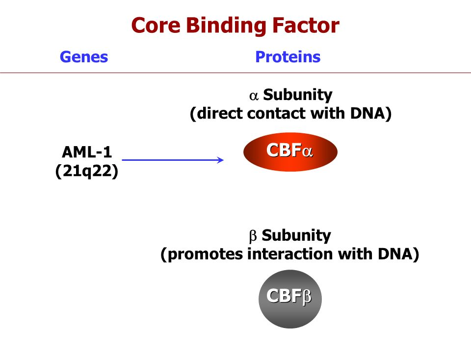 (direct contact with DNA) (promotes interaction with DNA)