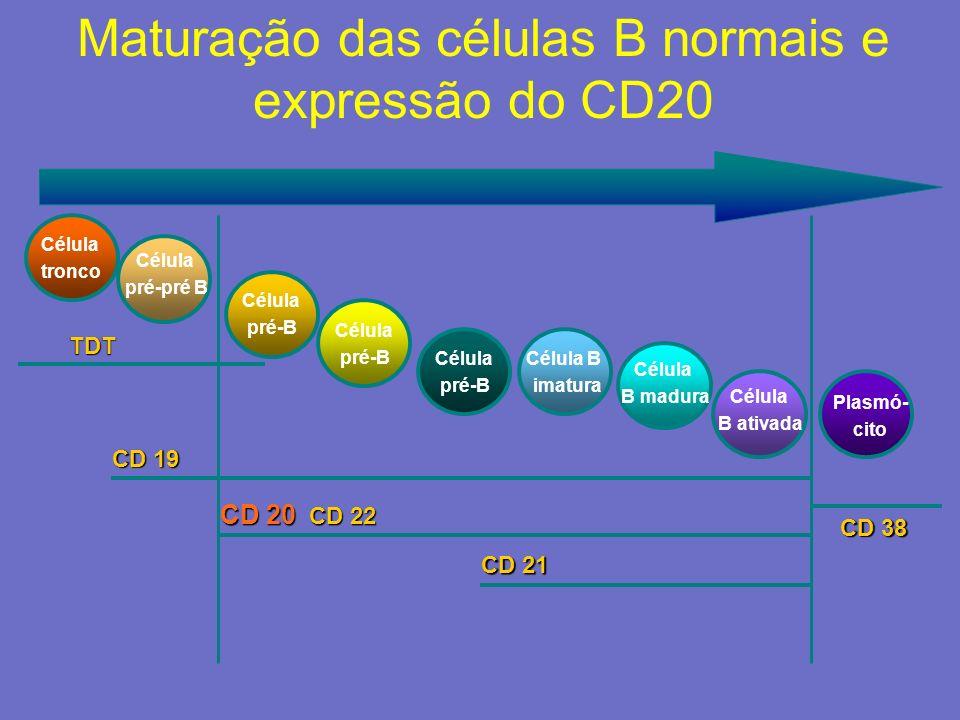 Maturação das células B normais e expressão do CD20