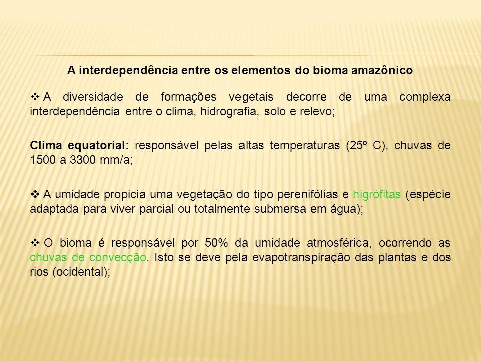 A interdependência entre os elementos do bioma amazônico