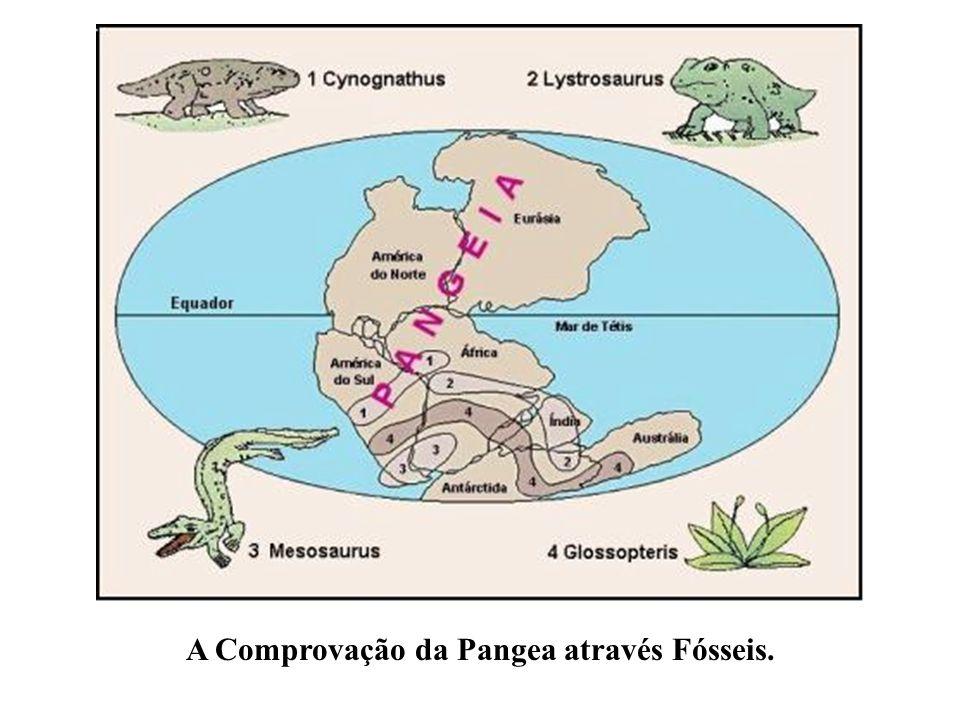 A Comprovação da Pangea através Fósseis.