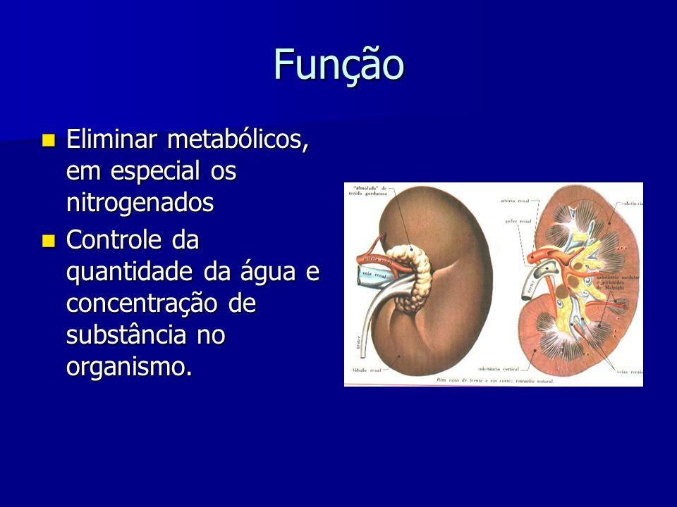 Função Eliminar metabólicos, em especial os nitrogenados