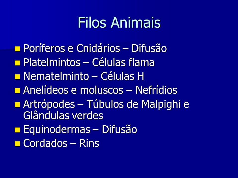 Filos Animais Poríferos e Cnidários – Difusão