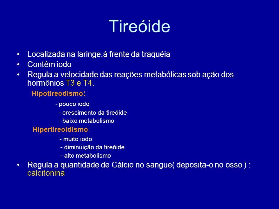 Tireóide Localizada na laringe,à frente da traquéia Contêm iodo