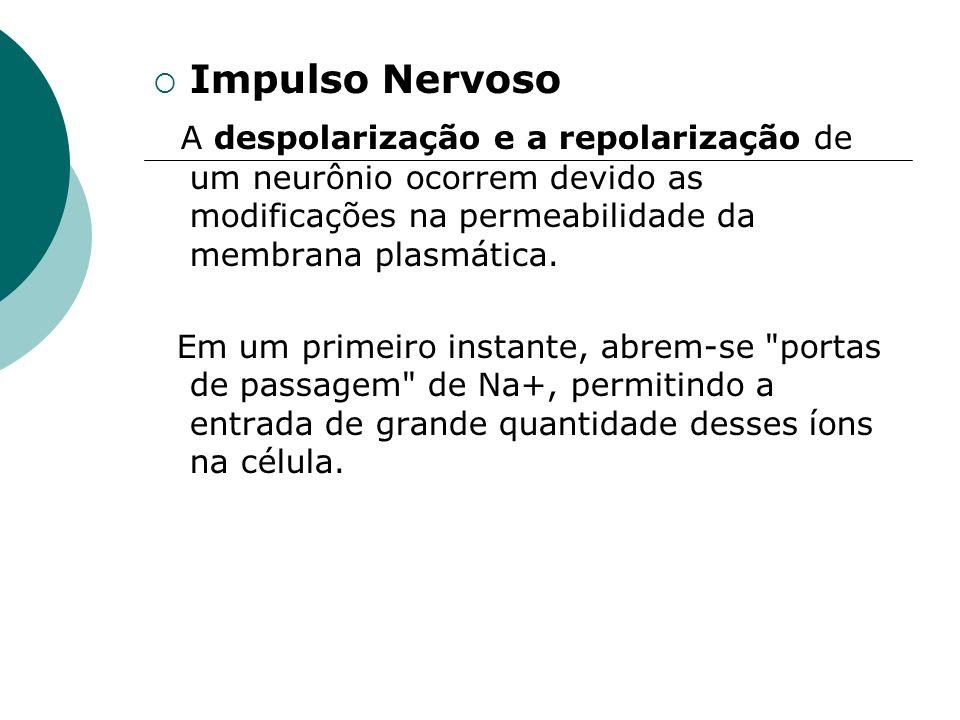 Impulso Nervoso A despolarização e a repolarização de um neurônio ocorrem devido as modificações na permeabilidade da membrana plasmática.