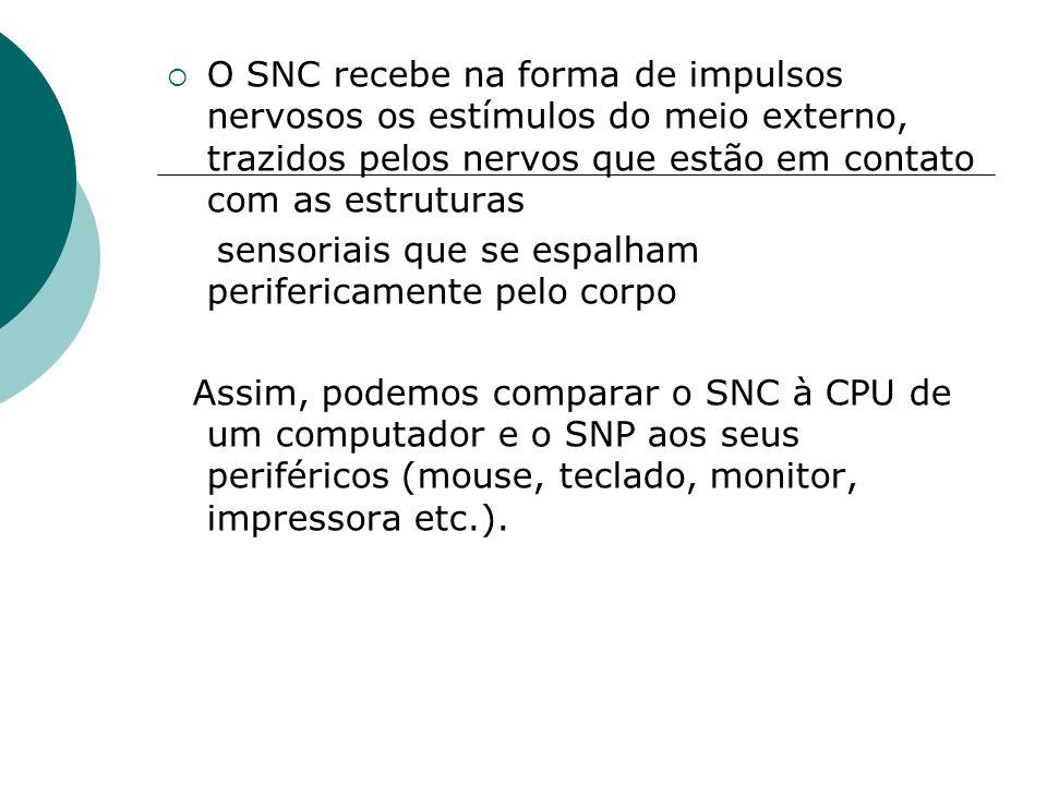 O SNC recebe na forma de impulsos nervosos os estímulos do meio externo, trazidos pelos nervos que estão em contato com as estruturas