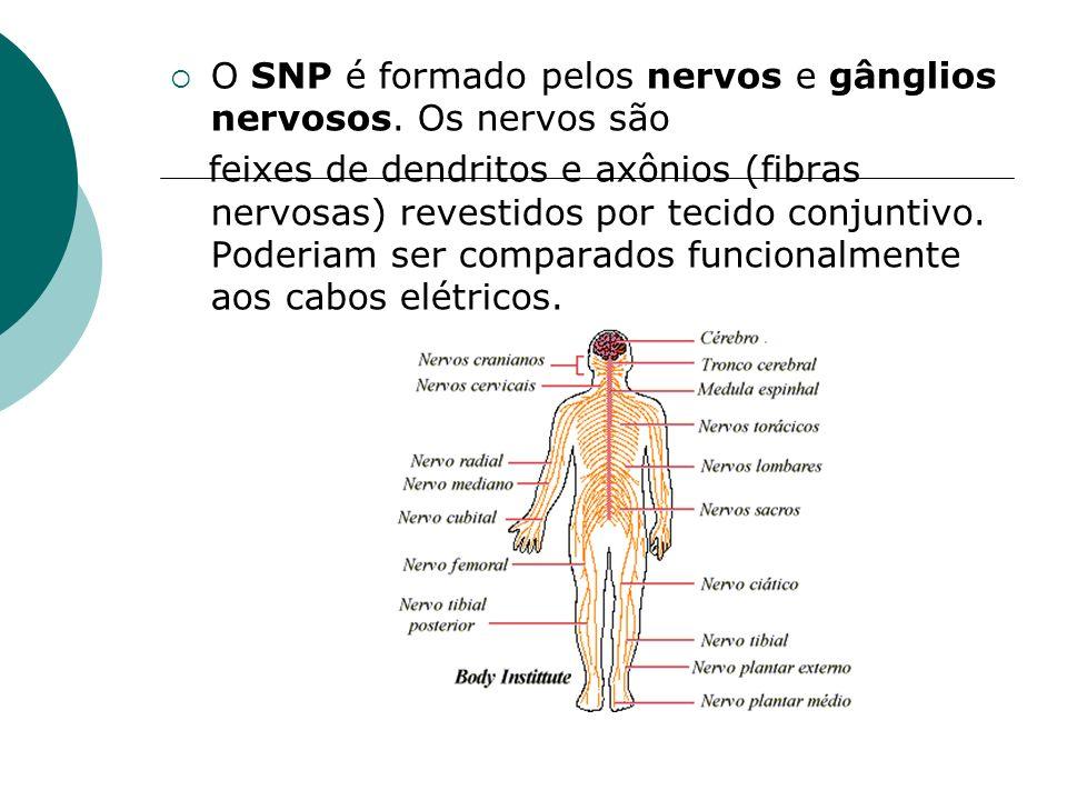O SNP é formado pelos nervos e gânglios nervosos. Os nervos são