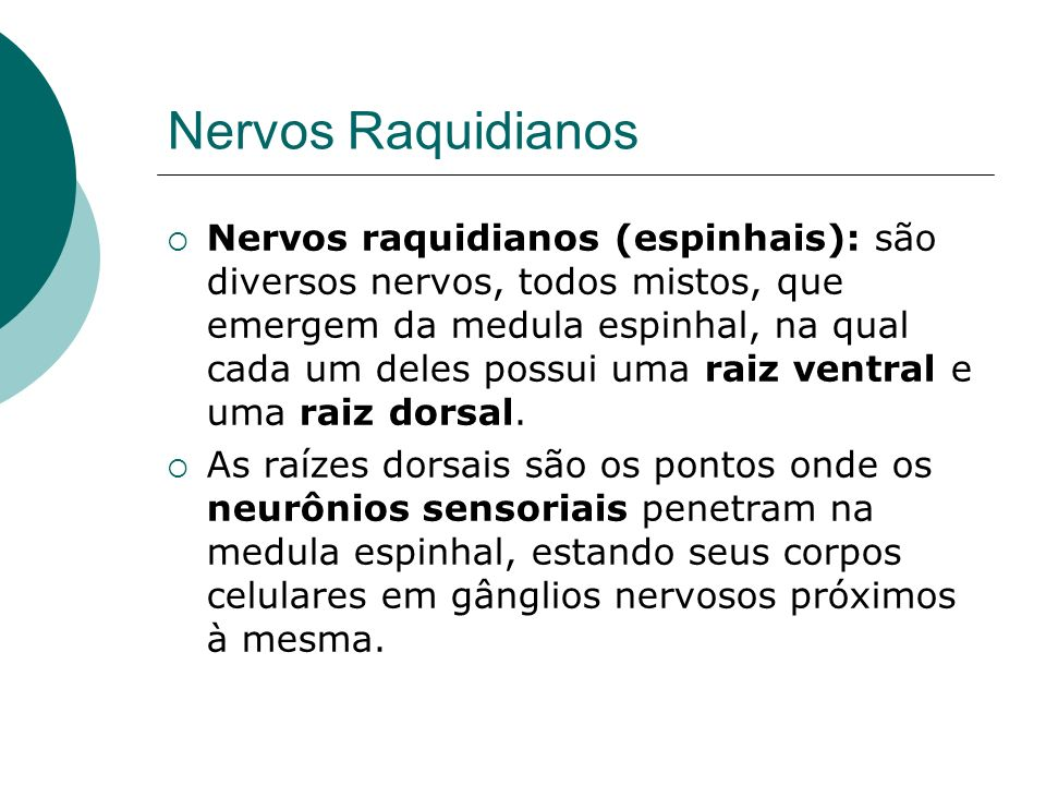 Nervos Raquidianos