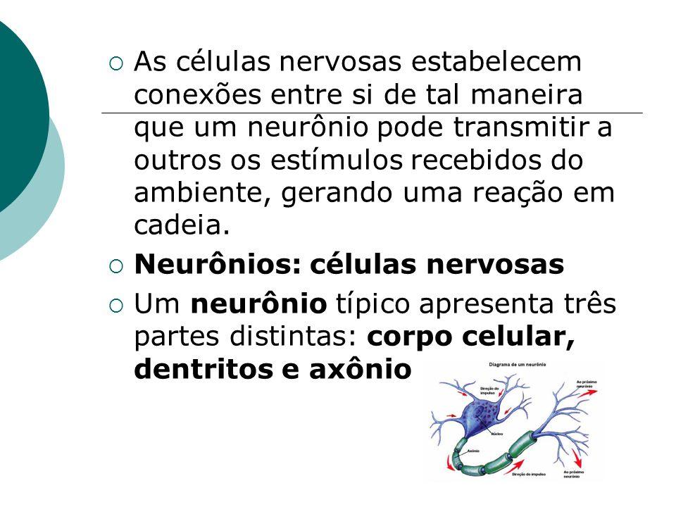 As células nervosas estabelecem conexões entre si de tal maneira que um neurônio pode transmitir a outros os estímulos recebidos do ambiente, gerando uma reação em cadeia.