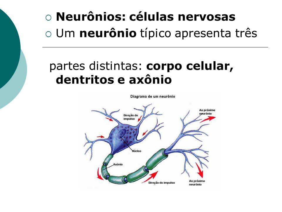 Neurônios: células nervosas