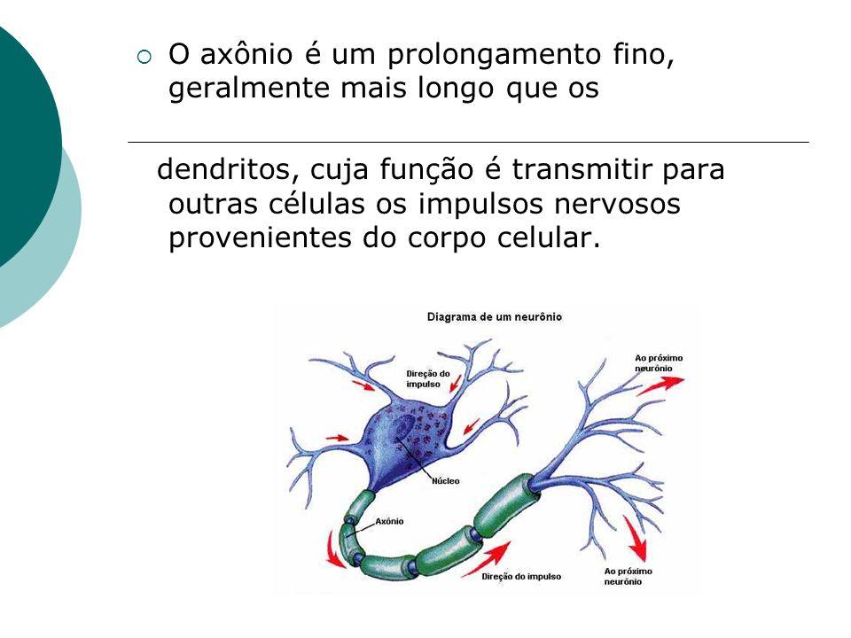 O axônio é um prolongamento fino, geralmente mais longo que os