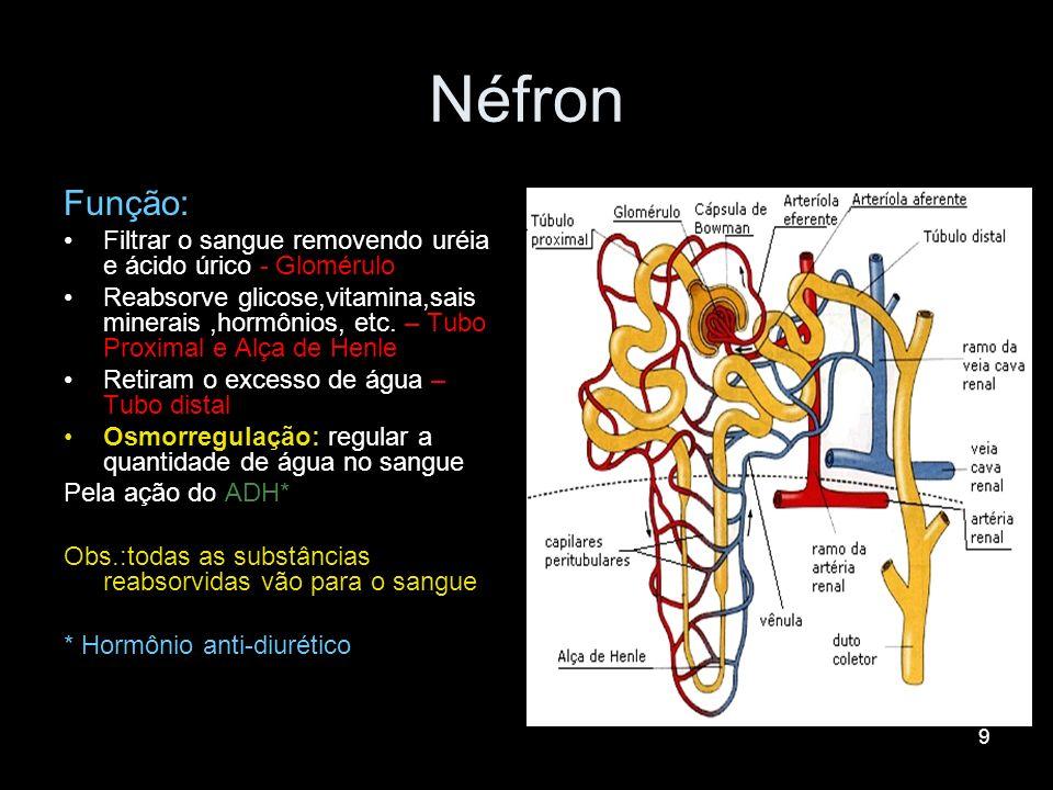Néfron Função: Filtrar o sangue removendo uréia e ácido úrico - Glomérulo.
