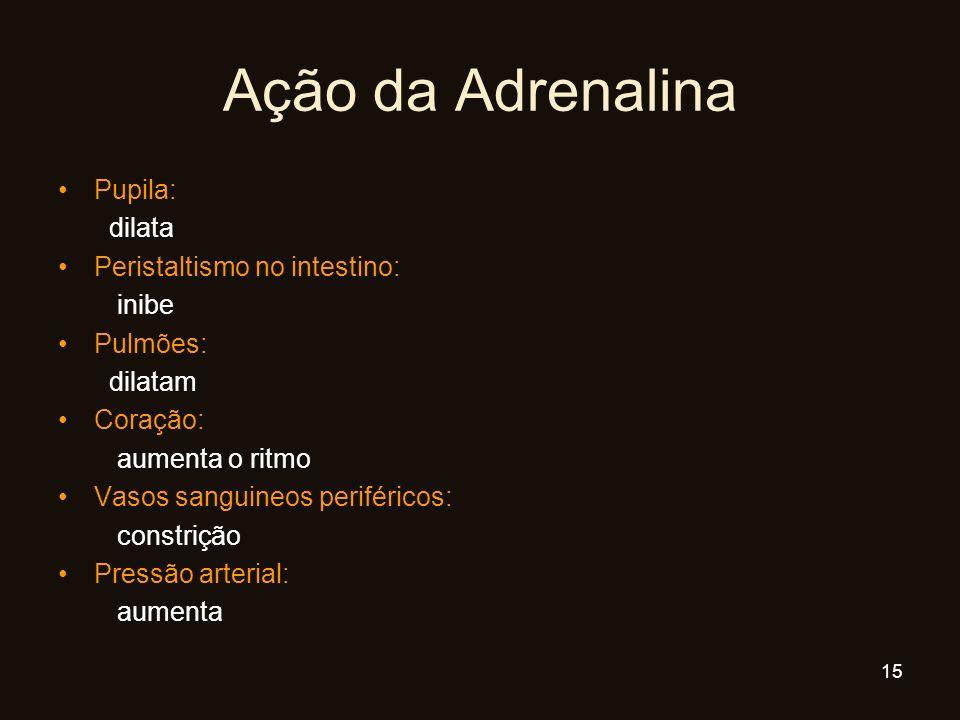 Ação da Adrenalina Pupila: dilata Peristaltismo no intestino: inibe