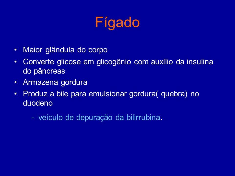 Fígado Maior glândula do corpo