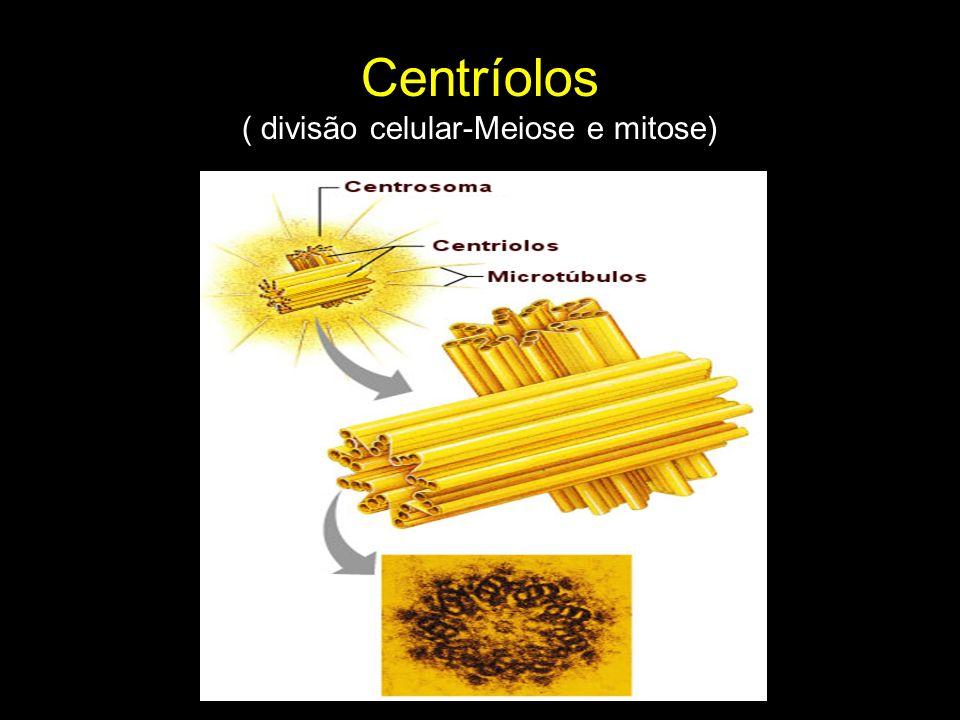 Centríolos ( divisão celular-Meiose e mitose)