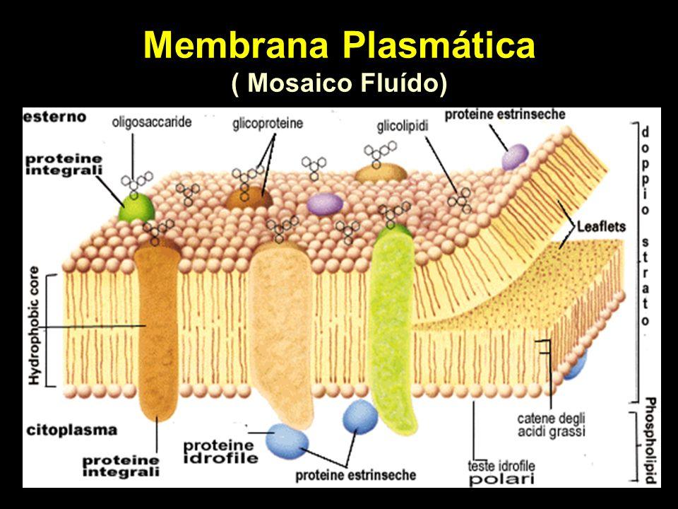 Membrana Plasmática ( Mosaico Fluído)