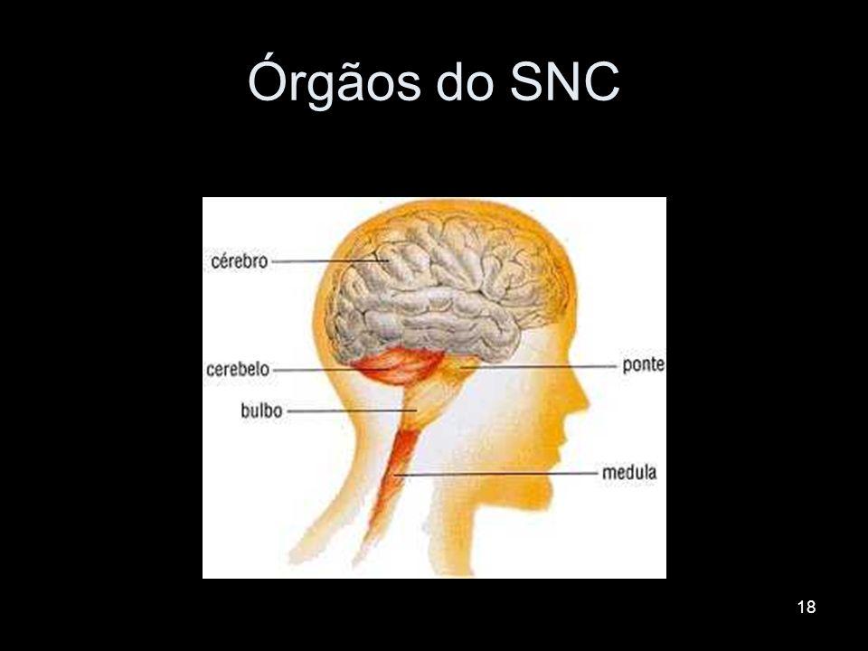 Órgãos do SNC