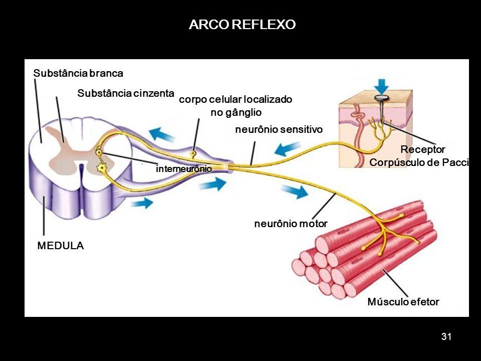 corpo celular localizado no gânglio