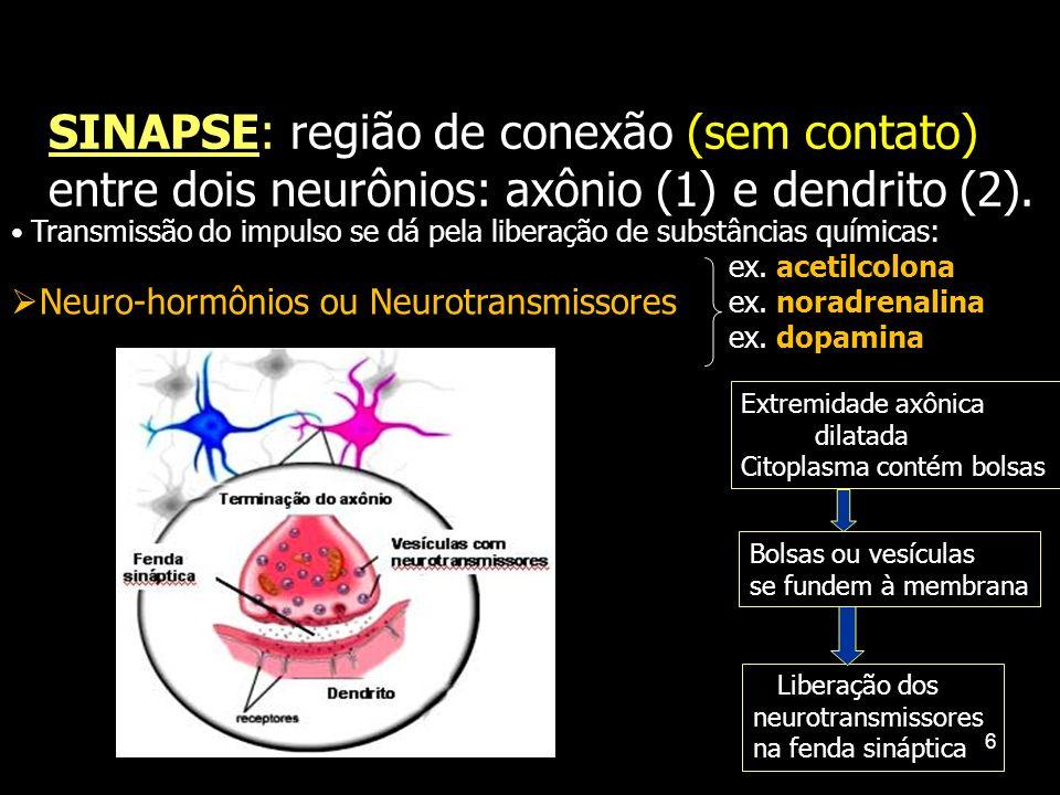 SINAPSE: região de conexão (sem contato) entre dois neurônios: axônio (1) e dendrito (2).