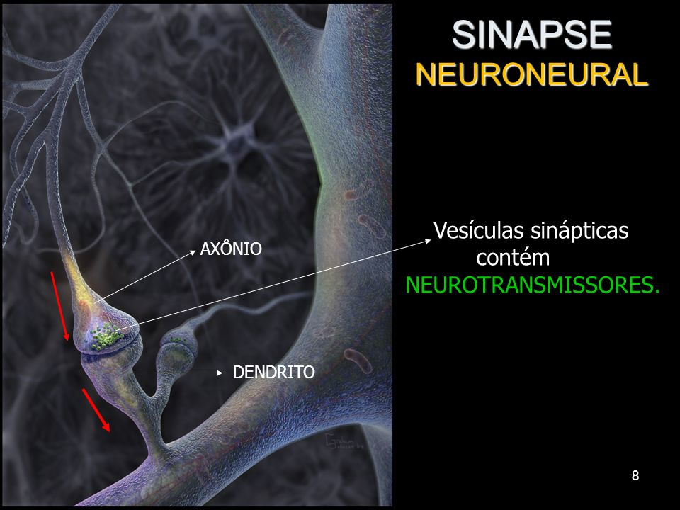 SINAPSE NEURONEURAL Vesículas sinápticas contém NEUROTRANSMISSORES.
