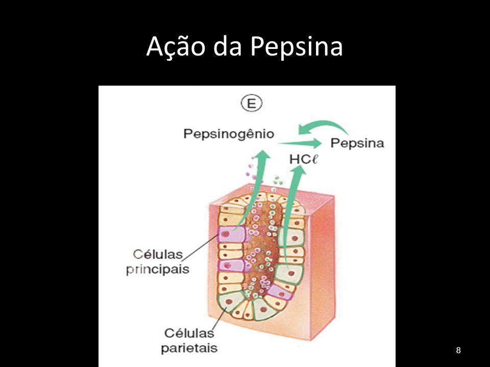 Ação da Pepsina