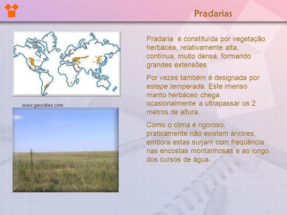 Pradarias Pradaria é constituída por vegetação herbácea, relativamente alta, contínua, muito densa, formando grandes extensões.