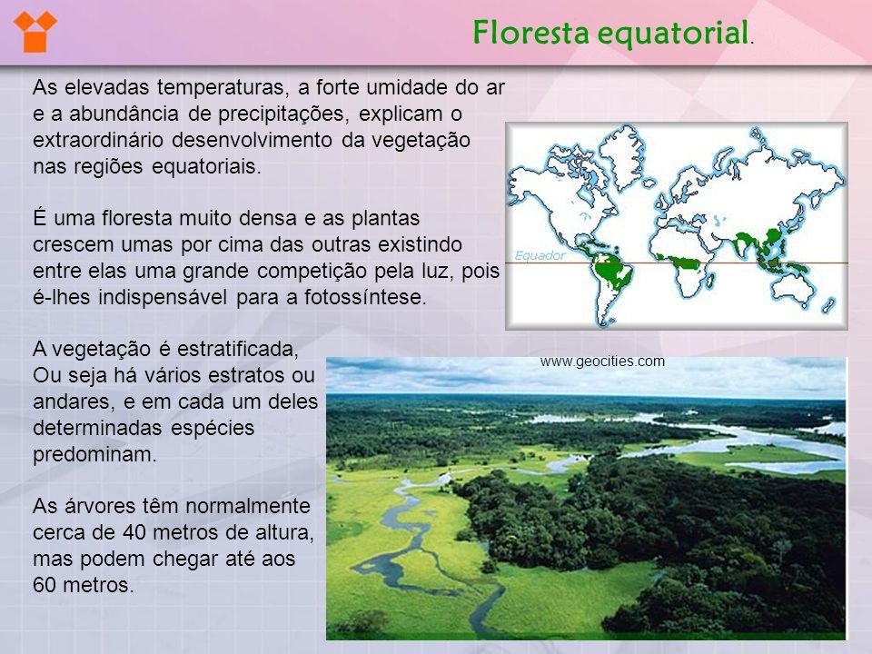 Floresta equatorial.