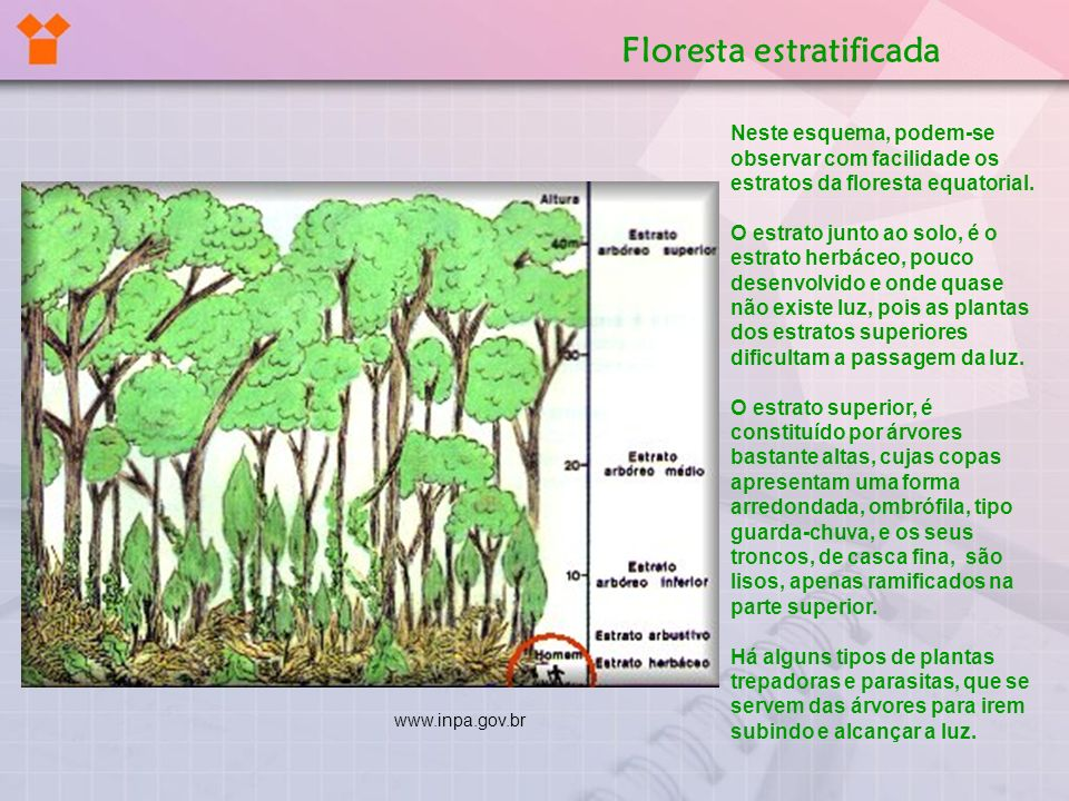 Floresta estratificada