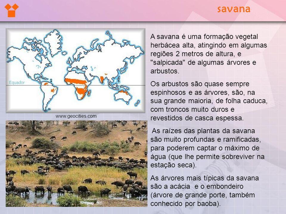 savana A savana é uma formação vegetal herbácea alta, atingindo em algumas regiões 2 metros de altura, e salpicada de algumas árvores e arbustos.