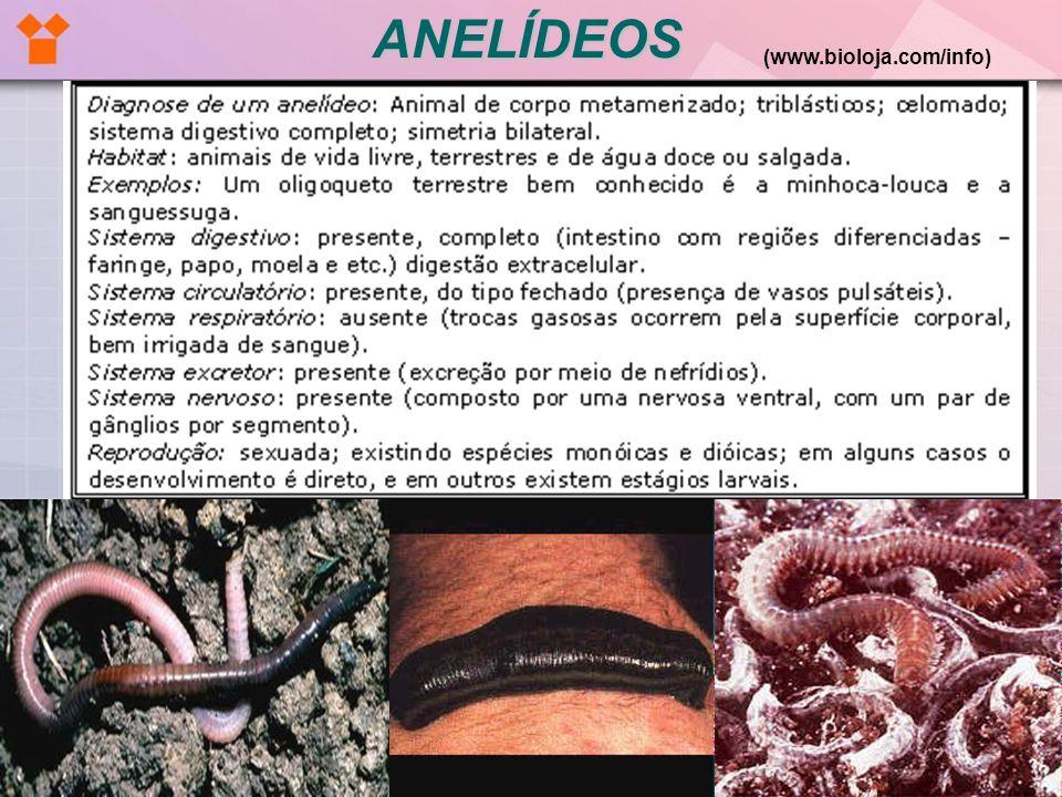 ANELÍDEOS (www.bioloja.com/info)