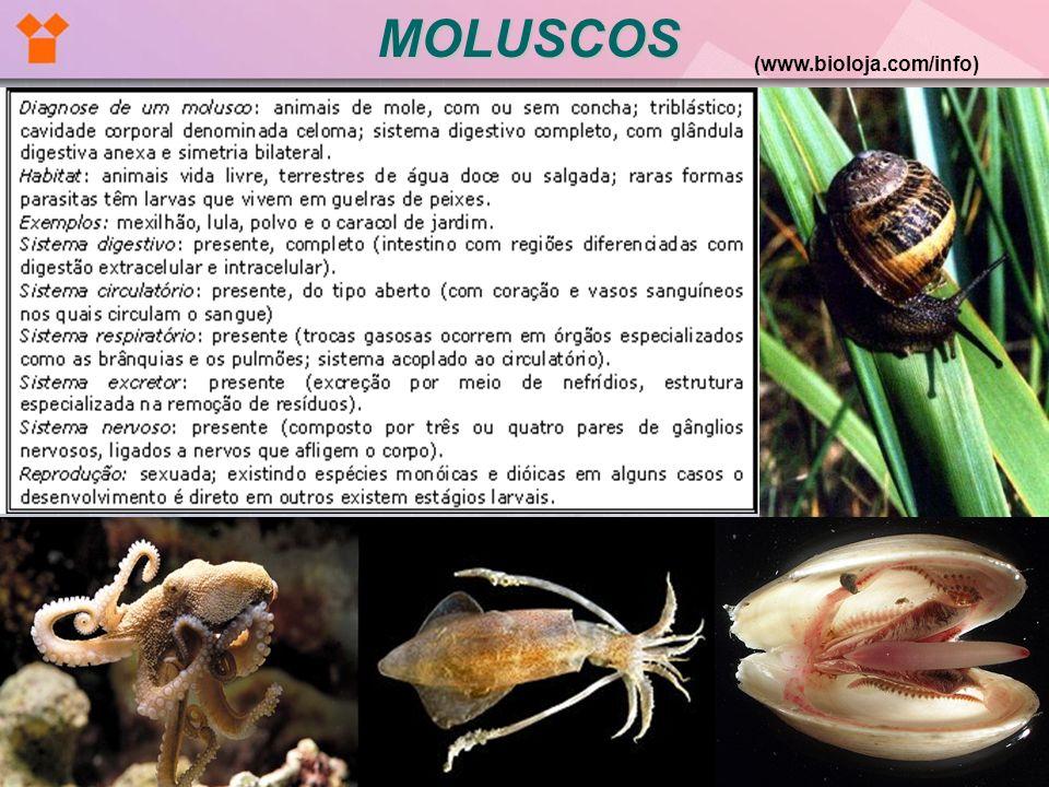 MOLUSCOS (www.bioloja.com/info)
