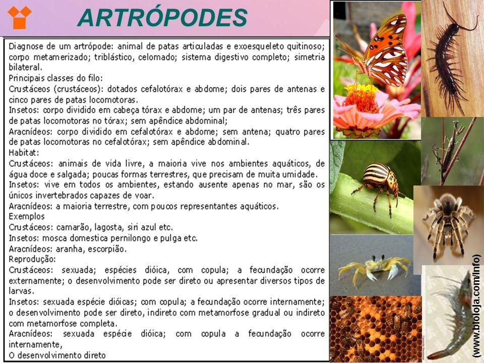 ARTRÓPODES (www.bioloja.com/info)