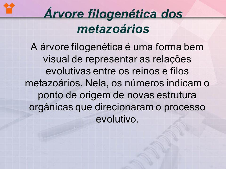 Árvore filogenética dos metazoários