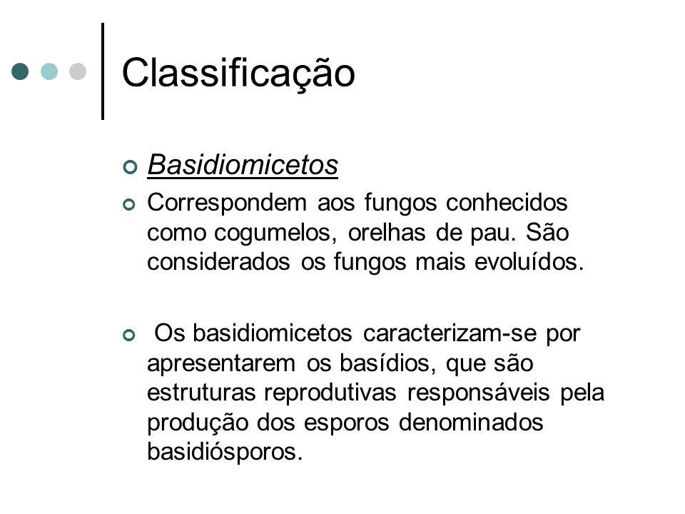 Classificação Basidiomicetos