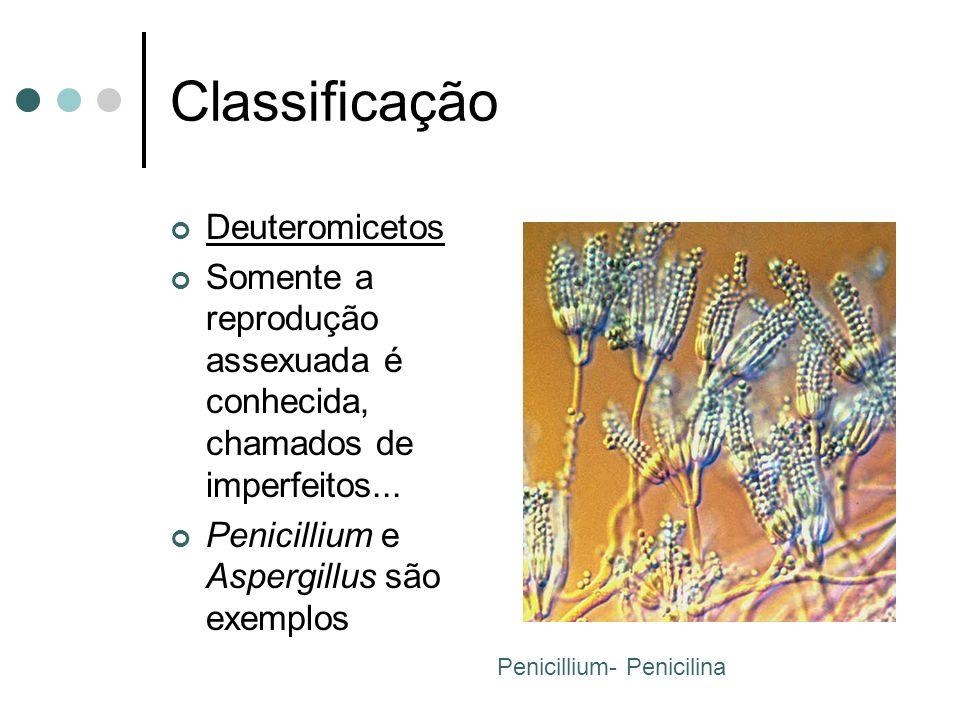 Classificação Deuteromicetos
