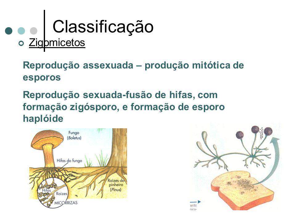 Classificação Zigomicetos