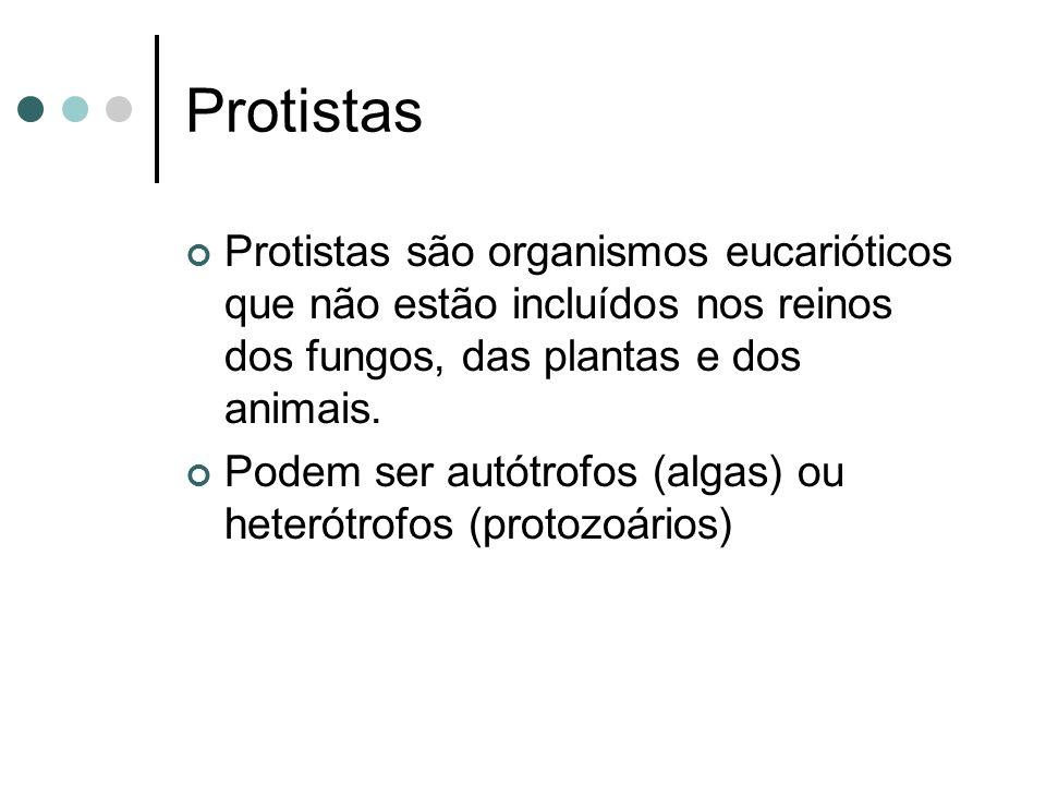 Protistas Protistas são organismos eucarióticos que não estão incluídos nos reinos dos fungos, das plantas e dos animais.
